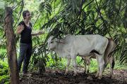 UCSF Institute for Global Health Sciences master's student standing near a white cow in Costa Rica